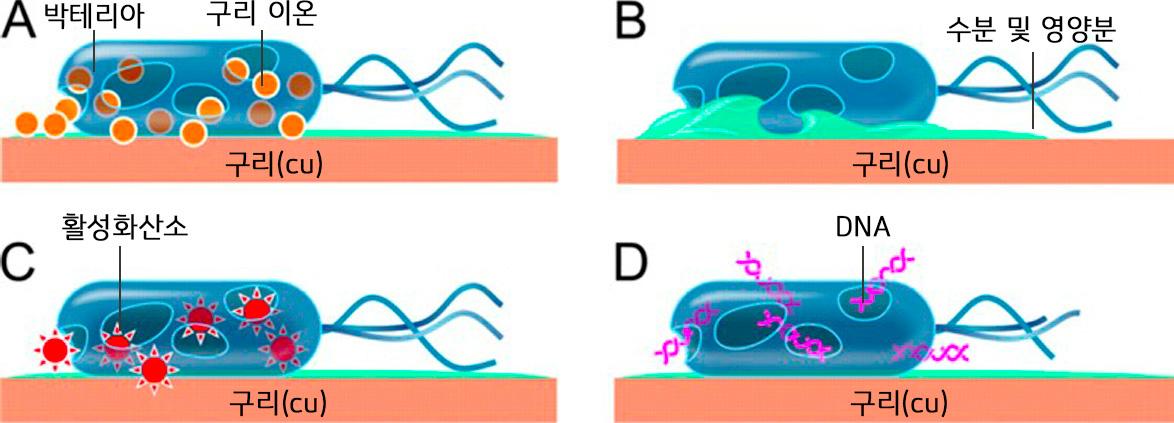 박테리아가 죽는 과정의 이미지